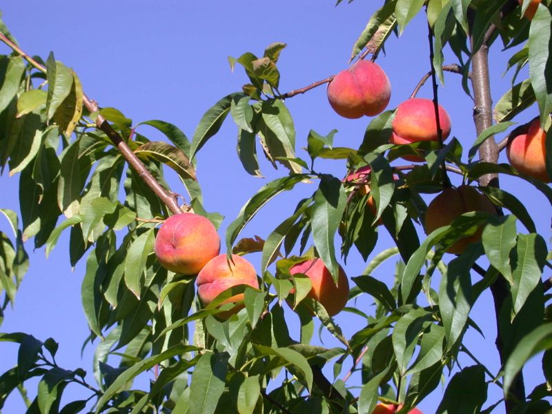 Pick Fruit Stunning Mountains 9 Feb Start