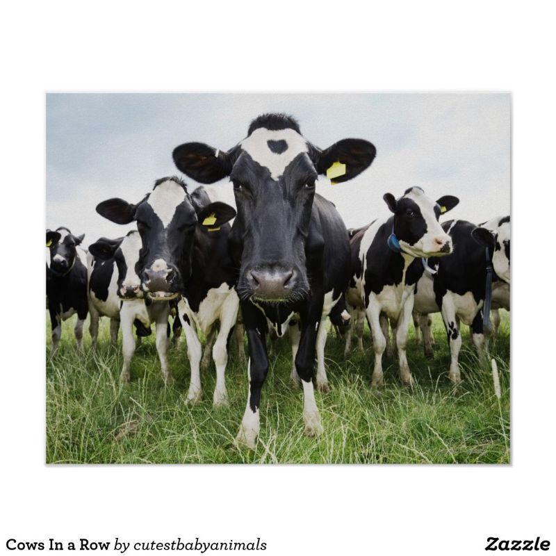 Milk Harvester