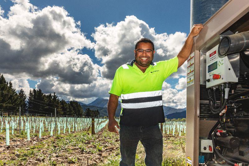 Summer Vineyard Workers