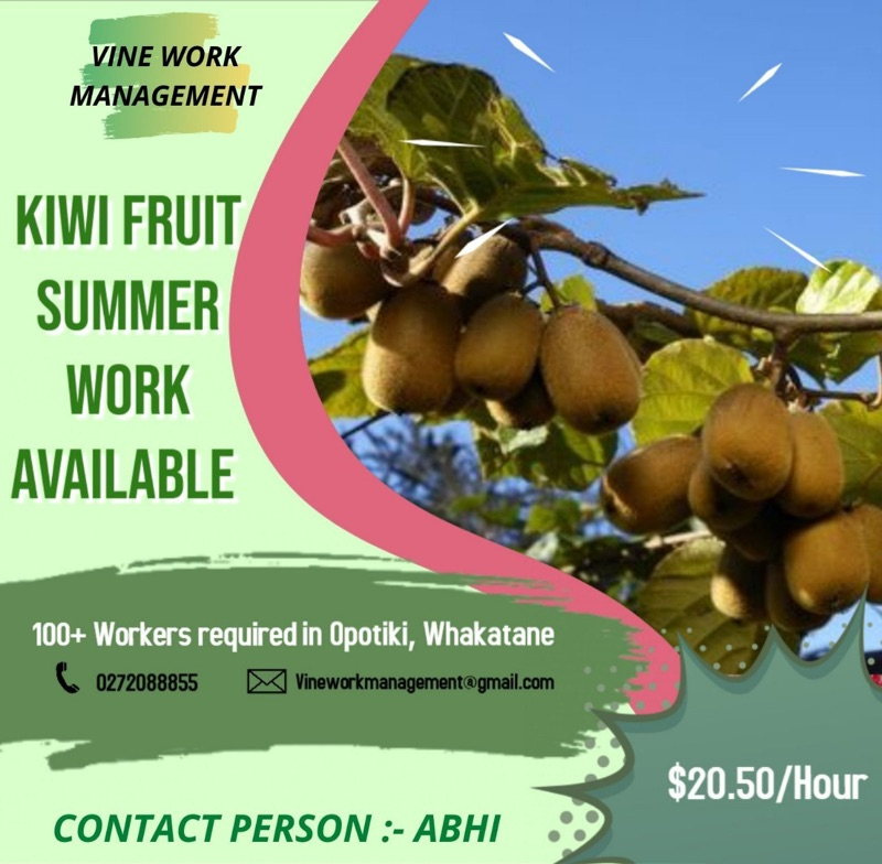 Kiwi Fruit Worker