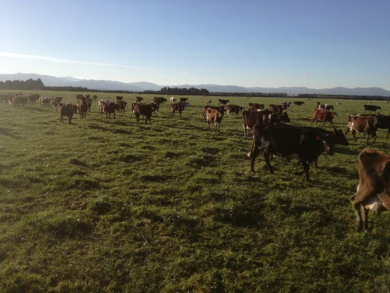 Dairy Farm Assistant