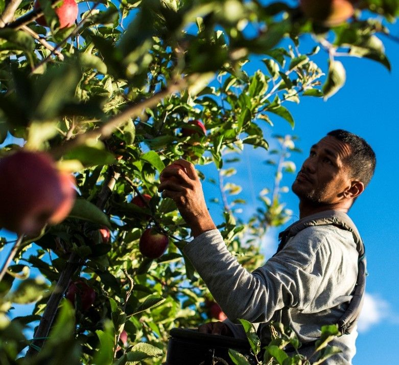 Apple Picking & Onsite Accommodation