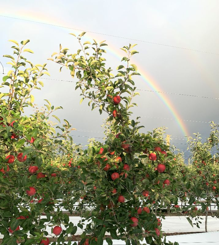 Apples Pickers Wanted, Free Onsite Camping