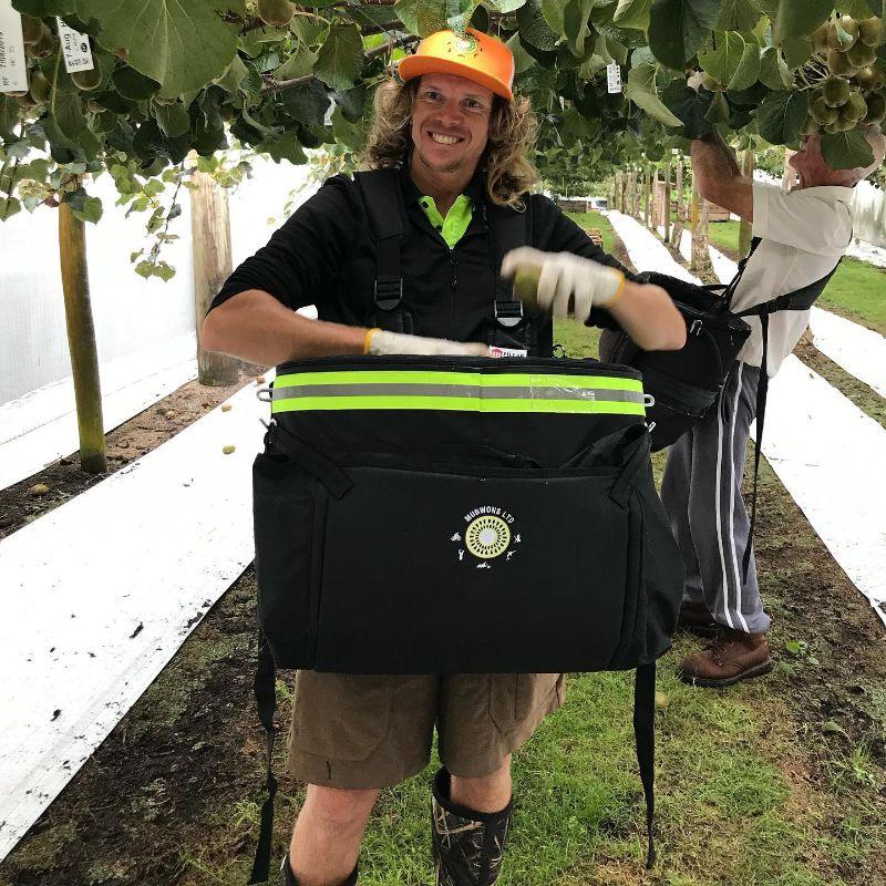 Kiwi Fruit Picking 2021