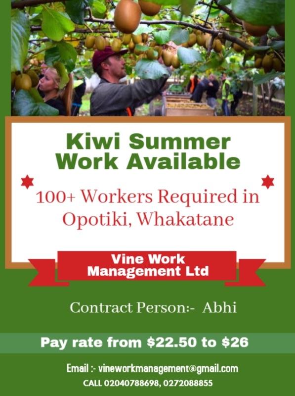 Kiwi Orchard Summer Work