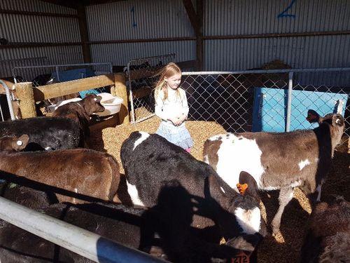 Calf Rearing Assistant