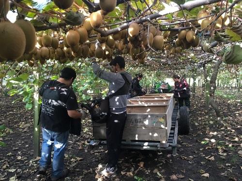 Kiwi Orchard Supervisor