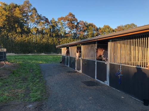 Temporary Equine Staff Required